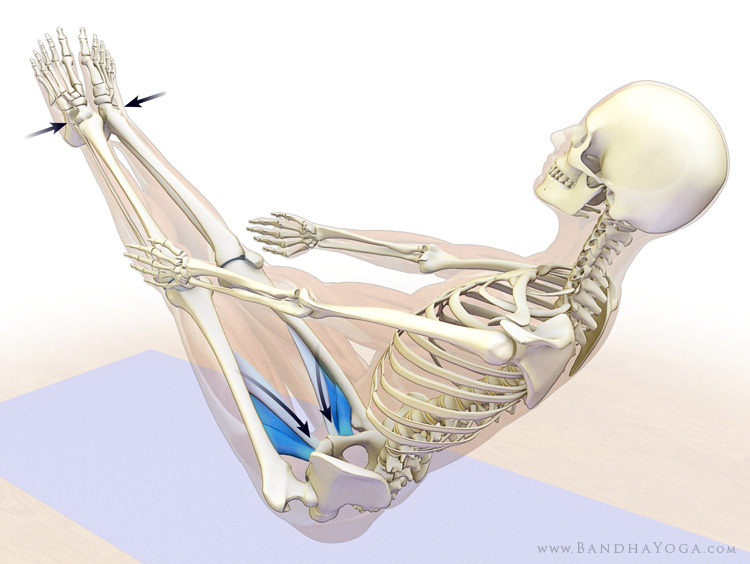 adductor muscles in navasana