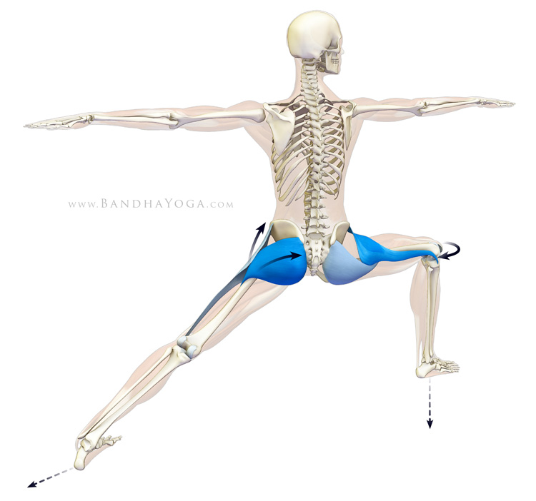 gluteus maximus and tensor fascia lata in warrior II