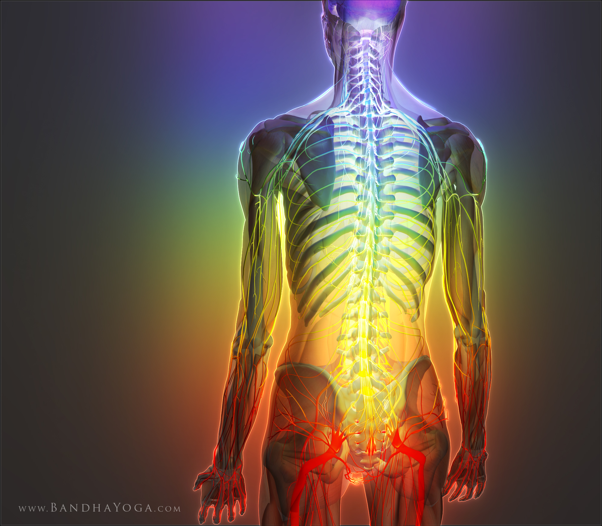 The Daily Bandha: Degenerative Disc Disease, The Sushumna