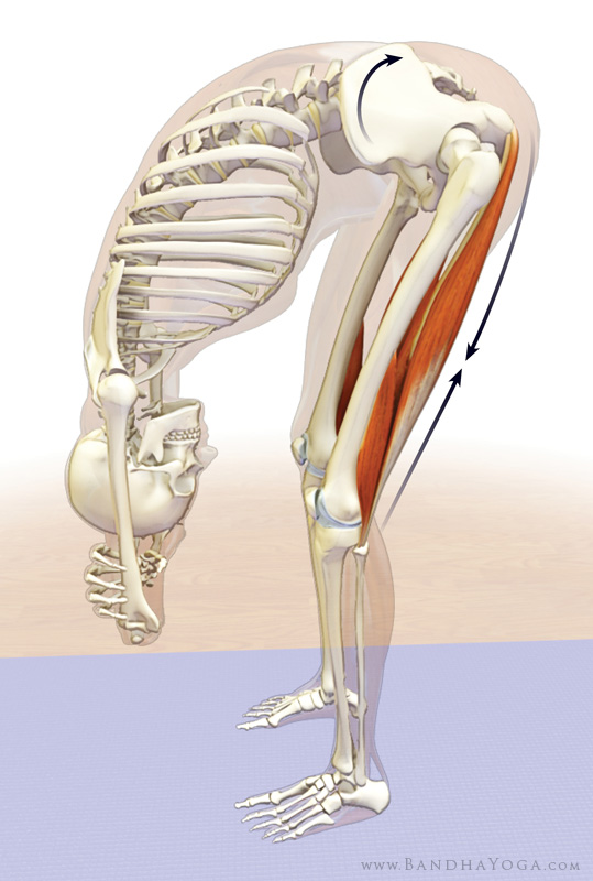 tight hamstrings in uttanasana