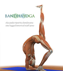 eka pada viparita dandasana, one legged inverted staff pose